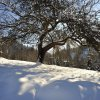 landschaft_baum_winter_m